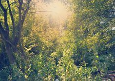 nature in the woods, reflex nikon. Oviedo Aturias