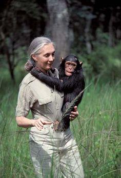 Jane Goodall | Biography & Facts | Britannica.com Wildlife Biologist, Jane Goodall, Portraits, Chimpanzee, Doja Cat, Zoology, Women In History, Powerful Women, Belle Photo