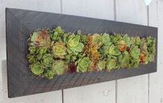 living wall images - Google Search