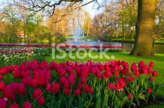 Spring Flowers in a Park Royalty Free Stock Photo Park Photos, Image Now, Spring Flowers, Tulips, Pond, Fountain, Royalty Free Stock Photos, Plants, Water Pond