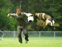 Schutzhund/IPO dog sport photography
