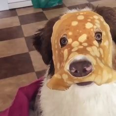 No one cared who I was until I put on the mask - Tiere - Perros Graciosos Funny Animal Memes, Funny Animal Videos, Cute Funny Animals, Dog Memes, Funny Animal Pictures, Cute Baby Animals, Funny Dogs, Animals And Pets, Funny Memes