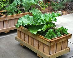 Roll around Grow in Containers