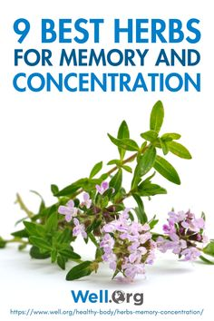 If you have brain fog or want to improve your cognitive function, these nine best herbs for memory can help. RELATED: 9 Foods To Boost Your Brain Power Herbs for Memory You Should Get Your Hands On Green Tea One of the herbs for memory and focus is Healing Herbs, Medicinal Herbs, Alternative Health, Alternative Medicine, Natural Herbs, Natural Health, Leiden, Increase Memory, Larissa Reis