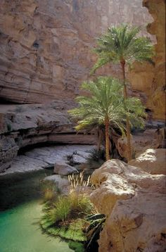 oasis in the rocks (Oman)