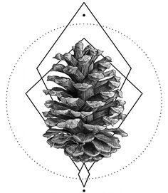 Here's a pine cone. Pine cones are pretty cool.