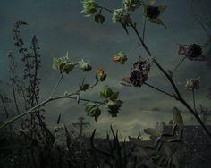 DANIEL SHIPP PHOTOGRAPHER | Botanical Inquiry | 1