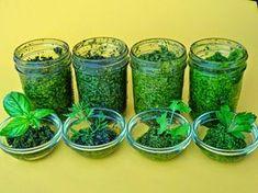 Schmackhaftes Kräuterpesto zum selber machen         Liebhaber von Nudeln oder frischem Gemüse werden den frischen und aromatischen Gesch...