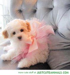 Cute Puppy in a Tutu