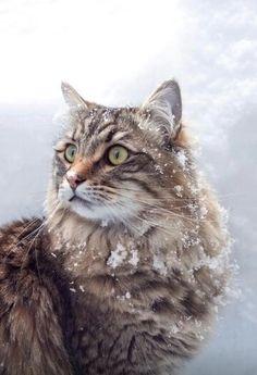 Winter beauty<3 (snow cat)