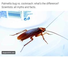 how to get rid of palmetto bugs outside