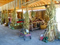 I want to go here!!! Fall Corn Maze, Pumpkins & Gourds