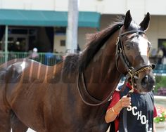 Honor Code preps for the Kentucky Derby at Gulfstream Park March 9, 2014. Cogilanese Photos