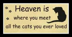 Heaven is where you will meet all the cats you ever loved. I have a lot of them that has crossed the rainbow bridge my shadow bug is my angel baby I will always love him even though hes gone but never forgotten until we meet again moma loves you my angel Crazy Cat Lady, Crazy Cats, I Love Cats, Cute Cats, Funny Cats, Adorable Animals, Cat Quotes, Animal Quotes, Lovers Quotes