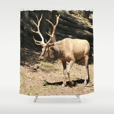 Elk side by Sarah Shanely Photography $68.00
