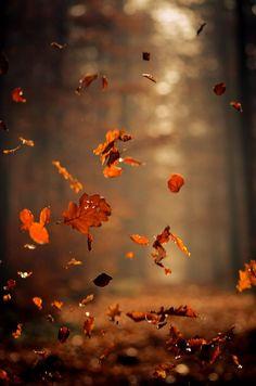 """""""The fallen leaves danced in little swirls like child ballerinas.""""--The Creaking Tree (Marquette)"""