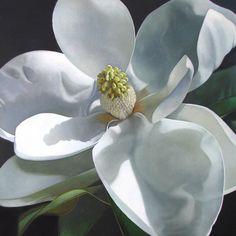 Magnolia  Artist M Collier