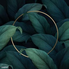 Gold round frame on tropical leaves background premium image by eyeeyeview Trendy Wallpaper, Cute Wallpapers, Flower Backgrounds, Wallpaper Backgrounds, Neon Wallpaper, Illustration Botanique, Round Frame, Tropical Leaves, Background Patterns