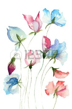 Sweet pea bloemen, aquarel illustratie