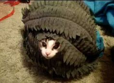 20 Hilarious Pets Who Take Hide-And-Seek Very Seriously Beautiful Gif, Animal Pictures, Cute Animals, Hilarious, Pets, Montage, Funny Videos, Crafty, Youtube
