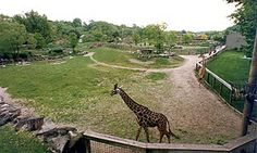 Cleveland Zoo - favorite place for our family.