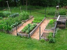 What You Should Know about Raised Vegetable Garden : Starting A Raised Bed Organic Vegetable Garden. Starting a raised bed organic vegetable garden. Backyard Vegetable Gardens, Vegetable Garden Design, Outdoor Gardens, Garden Plants, Raised Garden Bed Plans, Raised Beds, Large Backyard, Backyard Ideas, Garden Ideas