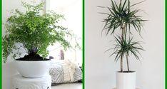 14 pokojových rostlin do stínu a polostínu Vintage Apron Pattern, Aprons Vintage, Vintage Patterns, My New Room, Hobbies And Crafts, Knitting Projects, Flora, Drawings, Creative
