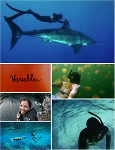 "Variables with Kimi Werner-Patagonia Spearfishing Ambassador, Kimi Werner, Swims With Great White Shark    This beautiful short film, ""Variables with Kimi Werner,"" features stunning visuals, heart, soul, beauty, and balance. Gliding along with a large Great White Shark, Kimi Werner swims where few others have dared to and shares her thoughts on the environment she lives in."