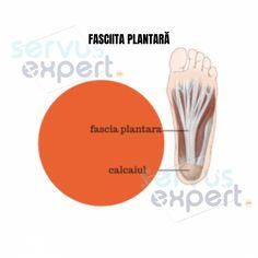 FASCIITA PLANTARĂ: durere de talpă și călcâi. Cauze și Soluții Plantar, Stretching, Calculus, Stretching Exercises, Sprain