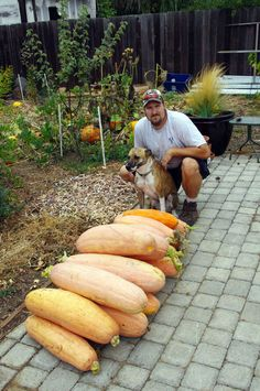 All of this Pink Banana Squash came from just a single volunteer plant that we only watered twice