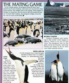 Penguin Facts | Penguin Place Penguin Facts, Sea Ice, Ocean House, Antarctica, Customer Service, Penguins, Places, Animals, Animales