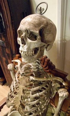real skeleton - Google Search