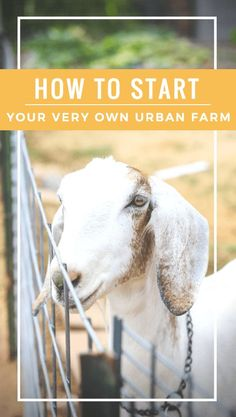Urban Farming: Getting Started with your Dream