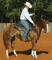Controlling the 5 body parts of the horse-with Clinton Anderson