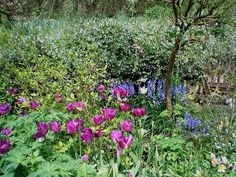 glastonbury chalice gardens, Glastonbury, England