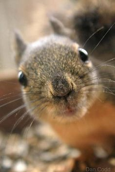 squirrel licking glass - Google Search
