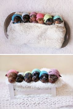 The cutest newborn photoshoot ever for a proud sausage dog mother and her six teeny tiny newborn pups. Just look at their hats. #doxie #doxies #dachshund #dachshundlove #dachshunddog #dachshundfun #dachshundpuppy #dachshundlover #dachshundworld #dachshundlife #dachshunds