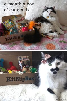 Order a box of goodies for your cat today at —> https://www.kitnipbox.com/?utm_source=pinterest&utm_medium=cpc&utm_content=oreo_baby-2im-text&utm_campaign=oreo_baby-USUK-IOSDT and treat your kitty to toys, treats, and other wholesome products. Your purchase will also help us support #cats in need!