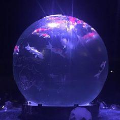 【ts0525idiot】さんのInstagramをピンしています。 《ちょっと時間があったので写真をば見返してたよ。 綺麗な写真を発見。 #写真#思い出#堂島#大阪#アクアリウム#金魚#綺麗 #写真好きな人と繋がりたい》