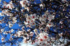 Huele a primavera...