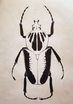 Insect drawing by Emma Mcilwaine