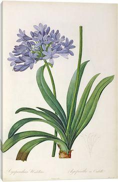 A Bunch of Flowers, Pierre Joseph Redoute - Google 검색