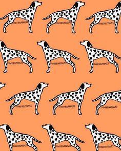 Dalmatian Love.