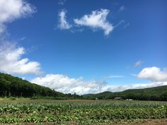 Blue skies after the rain, stopping at a farm for strawberries.