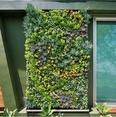 David Brenner, Contractors License, Living Walls, Vertical Gardens, Horticulture, Beverly Hills, Habitats, Exterior, Projects