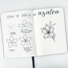TUTORIAL TIME! I'm moving through my tutorial request list, and this week it's a azalea! . . . BONUS: I recorded a video of me drawing the flower on the right on my YouTube channel. If you ever want to see more detail in the tutorials, this is your chance! Go check it out, the link is in my bio. If you enjoy it, like the video so I know to do more of them. Don't forget to subscribe! . . . #bujo #bujoaddict #bujojunkies #bujolove #bujoinspo #bujocommunity #bulletjournal #bulletjournaljunkies…