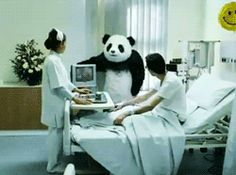 Never say no to the panda