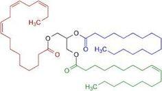 molecule vet