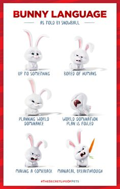 Bunny Language as told by Snowball - The Secret Life of Pets Animals Images, Animals And Pets, Cute Animals, Funny Bunnies, Cute Bunny, Bunny Quotes, Rabbit Names, Pets Movie, Up To Something