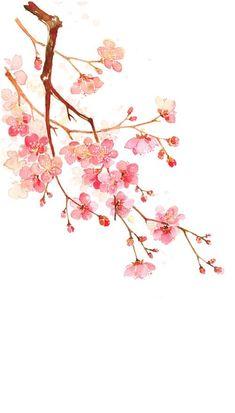 Cherry Blossom Watercolor, Red Cherry Blossom, Watercolor Flowers, Watercolor Art, Japanese Flowers, Japanese Art, Crown Painting, Bullet Journal Art, Plant Illustration
